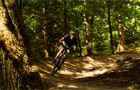 Verderers' Trail - Forest of Dean